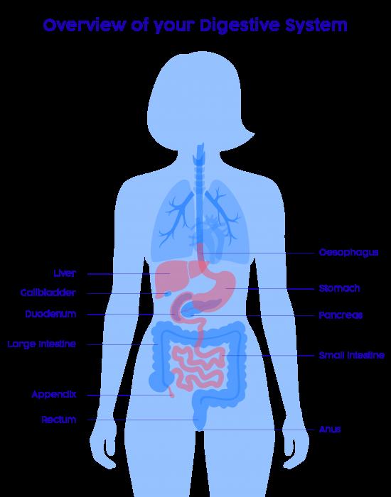 Internal Diagram