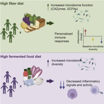 Graphic abstract - Gut-microbiota-targeted diets modulate human immune status